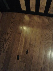 NUZZLES GIFT ON HARDWOOD FLOOR